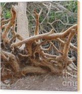 Eccentric Tree Root Growing In Ein Gedi Wood Print