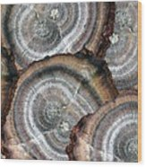 Eccentrically Concentric Wood Print