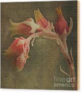 Echervia Blossom Wood Print by Pam Vick