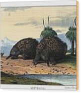 Echidna Or Porcupine Anteater Wood Print