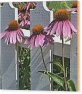 Echinacea And A White Picket Fence Wood Print