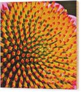 Echinacea Bloom Wood Print