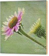 Echinacea Wood Print
