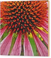 Echinacea Flower Upclose Filtered Wood Print