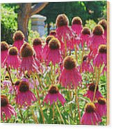 Echinacea Flowers Wood Print