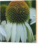 Echinacea Gold II Wood Print