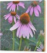 Echinacea Pallida Wood Print