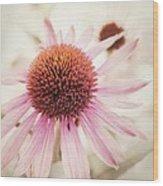 Echinacea Wood Print by Priska Wettstein