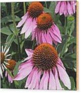 Echinacea Purpurea Or Purple Coneflower Wood Print