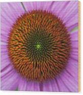 Echinacea Purpurea Rubinglow Flowers Wood Print by Tim Gainey