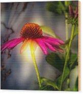 Echinacea Sunrise Wood Print