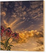 Echinacea Sunset Wood Print by Bob Orsillo