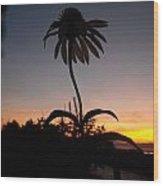 Echinacea Sunset Wood Print