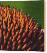 Echinacea Up Close Wood Print
