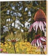 Echinacea With Bee Wood Print