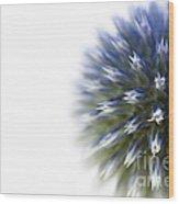 Echinops  Wood Print