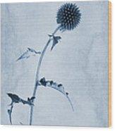 Echinops Ritro 'veitch's Blue' Cyanotype Wood Print