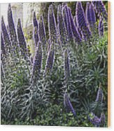 Echium And Tower Wood Print