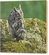Echo Of An Eastern Screech Owl  Wood Print