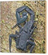 Ecuadorian Black Scorpion Wood Print
