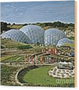 Eden Project 2002 Wood Print by David Davies