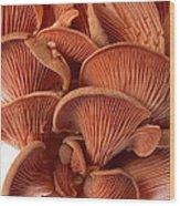 Edible Fungi 2 Wood Print