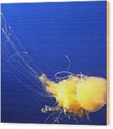 Egg - Yolk Jellyfish Wood Print