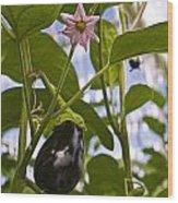Egg Plant  Wood Print