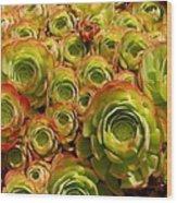 Eggplant Blossoms2 Wood Print