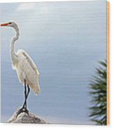 Egret And Tree Wood Print