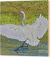 Egret Full Wing Span Wood Print