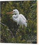 Egret In Bushes Wood Print