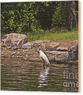 Egret In Central Park Wood Print