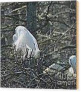Egret In Full Display Lake Martin Louisiana Wood Print