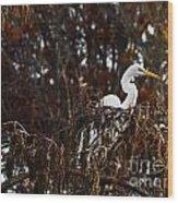 Egret In Hiding Wood Print