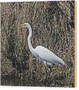 Egret In Marsh In Display  Wood Print