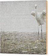 Egret In Rain Wood Print
