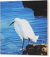An Egret In St. Augustine Wood Print