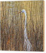 Egret In The Grass Wood Print