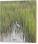 Egret In The Marsh Wood Print