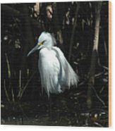Egret Of Sanibel 2 Wood Print