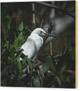 Egret Of Sanibel 5 Wood Print