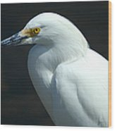 Egret Of Sanibel 7 Wood Print
