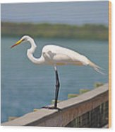 Egret On A Pier Wood Print