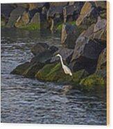 Egret On The Rocks Wood Print