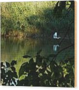 Egret Over The East River Wood Print