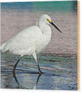 Egret Reflections- 2  Wood Print