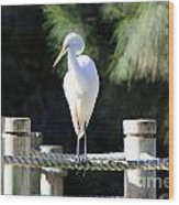 Egret Wood Print by Shannon Rogers