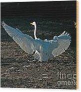Egret Showing Off Wood Print