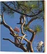 Egret Spoonbill And Stork Wood Print